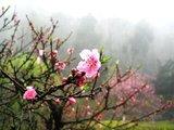 桃花源里看桃花