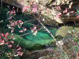 从枫树上方望下去,看到的一泓碧水