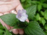 峡谷中不计其数各种各样不知名的小花之一