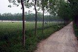 李元村的乡间小路
