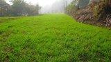 文曲阁-上山 路边的农田