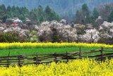 甘南清水景色