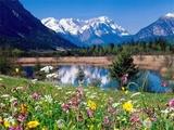 雪山和鲜花