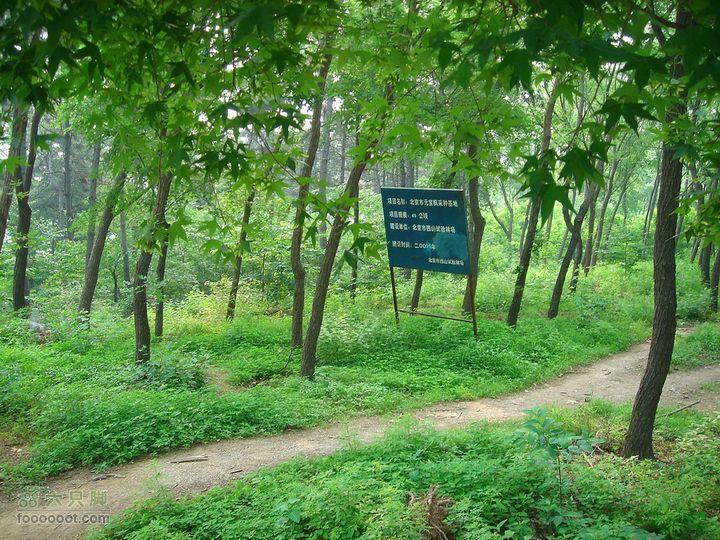 徒步驴友入门教程-香巴拉穿越才知道,驴友们穿越的这段叫北京市元宝枫采种基地