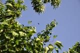 一只鹰从箭扣长城上空飞过