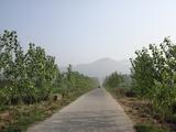 下泰良路往东的乡村小道