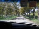 下山,走另一条沟,美丽的林荫道