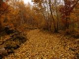 金色的河流