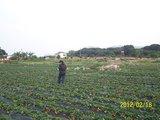 光明农场摘草莓