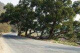 清风庙旁古树