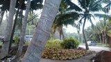 东郊椰林2