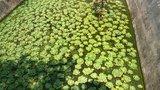 果树里的水池,里头还有青蛙