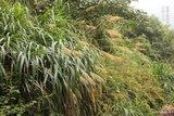 我们的绿野生活 17_47_5060