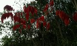 2013-12-28 17:31:25 途中红叶