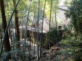 仙牛兰林场