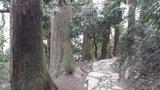 天目山的风景是没看到什么,但是随地都是百年大树