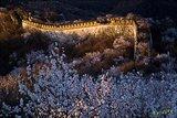 山花衬托下,晨光映红了古老的边墙