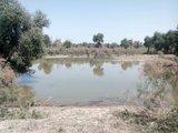塔里木河盆地沼泽