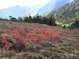 到神湖前的红草坡,很美!