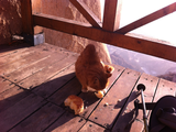与野猫分享面包