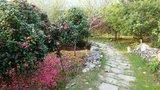 山脚下是很多花农种植的观赏植物
