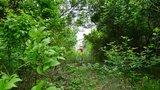 密林中的小路