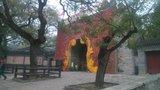 每年红叶节不变的装饰